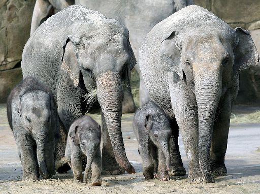Elefanten Zoo Köln