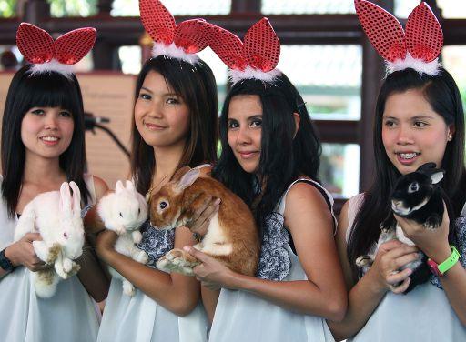 Hasen bringen Glück – Chinesen begrüßen neues Jahr