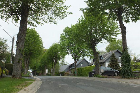 Wirtzfelder Weg in Bütgenbach