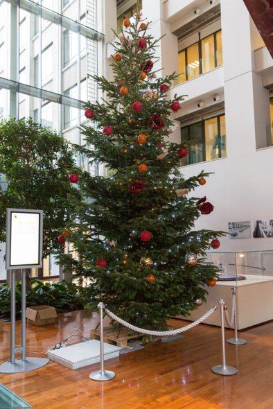 Weihnachtsbaum im flämischen Parlament stammt aus Raeren