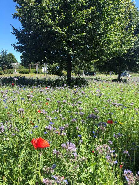 Eine Blumenwiese, die aus dem Saatgut 2020 entstanden ist (Bild: Gemeinde St. Vith)