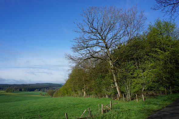 Einer von drei möglichen Standorten für den Bestattungswald - der Buchenbestand Eschborn zwischen Born und Medell (Bild: Stephan Pesch/BRF)