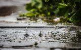 Regen (Bild: Siska Gremmelprez/Belga)